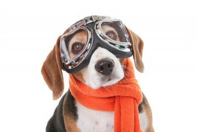 Nálepka svátek pet koncept, pes létání brýle