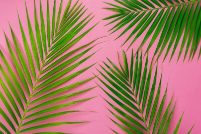 Nálepka Table top view aerial image of summer season holiday background concept.Flat lay coconut or palm green leaf on modern rustic pink paper backdrop.Free space for creative design mock up text for content