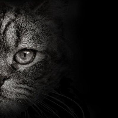 Nálepka Tmavá tlama kočka close-up. čelní pohled