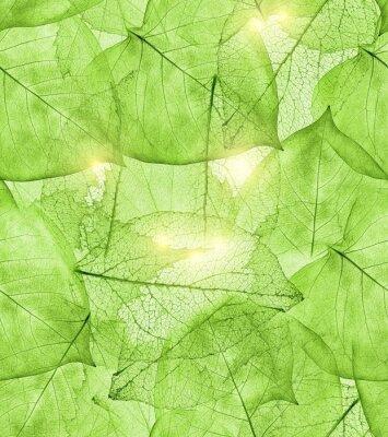 Nálepka tmavě zelené listy pozadí