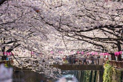 Nálepka Tokio, Japonsko - březen 30: Turistická neidentifikovaný pořízení s cherry květu přijata 30.března 2015 v Naga Meguro oblasti, Tokio. Tato oblast je oblíbená Sakura místo v Tokiu s krásným kanálu