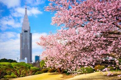 Nálepka Tokyo, Japonsko na Shinjuku Gyoen Park na jaře
