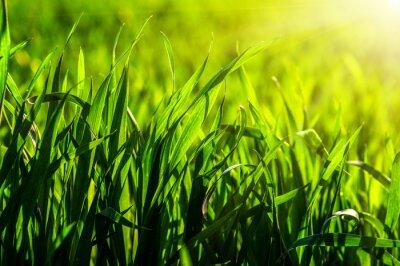 Nálepka tráva a sluneční světlo