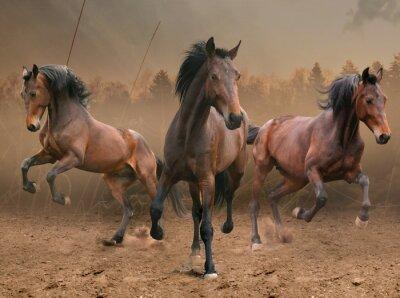 Nálepka tři koně