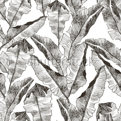Nálepka Tropic plants floral seamless jungle pattern. Print vector background of fashion summer wallpaper palm banana leaves in black and white gray style