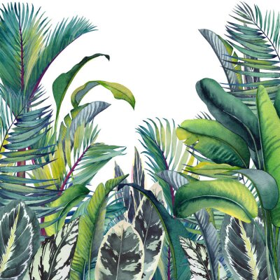 Nálepka Tropical card with palm trees, banana and calathea leaves. Watercolor illustration on white background.