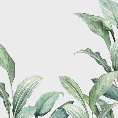 Nálepka Tropical leaves background