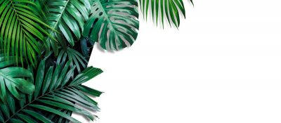 Nálepka Tropical leaves banner on white background with copy space