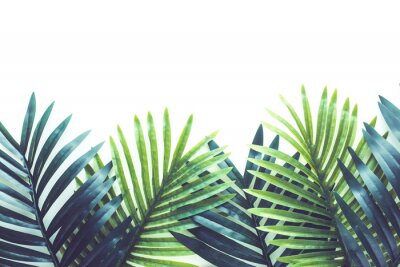 Nálepka Tropical leaves foliage plant close up with white copy space background.Nature and summer concepts ideas