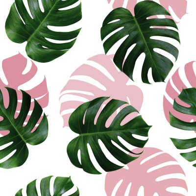 Nálepka Tropical leaves monstera,green leaf with pink shadow on white background.Monstera seamless pattern colorful illustration pink leaf,tree tropical exotic leaf for wallpaper textile vintage Hawaii style