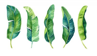 Nálepka Tropical leaves, palm leaves drawn by hand. Set of watercolor illustrations. For fabric, cards, invitations, weddings and other