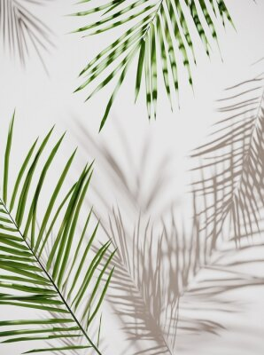 Nálepka Tropical palm green leaves on  light pastel background. Unobtrusive botanical background with shadow on the wall - trend frame, cover, card, postcard, graphic design - 3D, render, illustration.