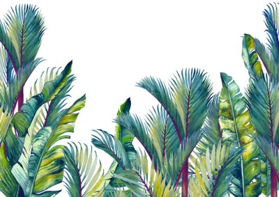 Nálepka Tropical palm trees and banana leaves. Isolated watercolor background.