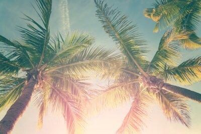 Nálepka Tropické krajiny s palmami a slunné obloze