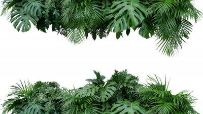 Nálepka Tropické listy zeleň rostlin bush květinové uspořádání přírody pozadí izolovaných na bílém pozadí, ořezové cesty zahrnuty.