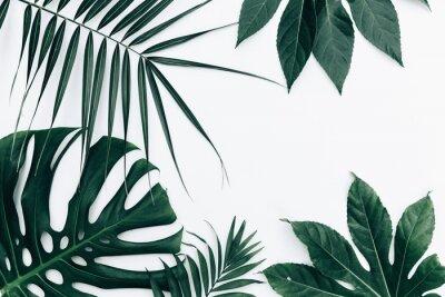 Nálepka Tropické trendy pozadí. Listy nad bílým pozadím