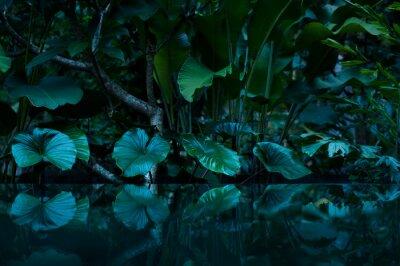 Nálepka tropický deštný prales s vodním zrcadle