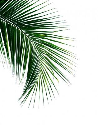 Nálepka tropický kokosový palmový list izolovaných na bílém pozadí