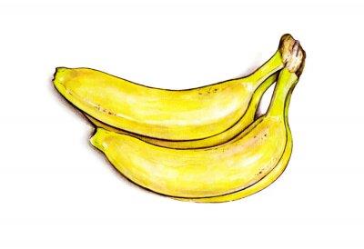 Nálepka Trs banánů na bílém pozadí. Akvarel ilustrace. Tropické ovoce