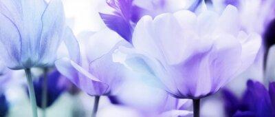 Nálepka tulipány azurová fialová ultra lehká