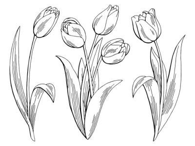 Nálepka Tulipány grafický černá bílá izolovaný skica ilustrační vektoru