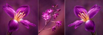 Nálepka Tulipány i Orchidea