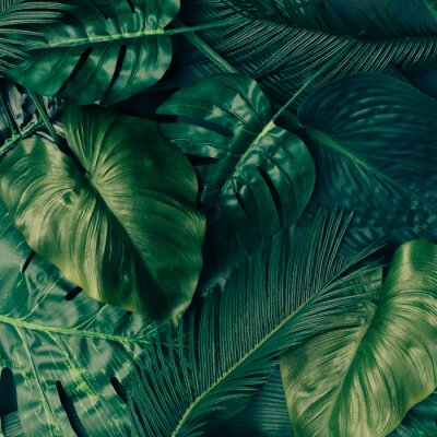 Nálepka Tvořivé rozložení tropických zelených listů. Příroda jarní koncept. Ploché leželo.