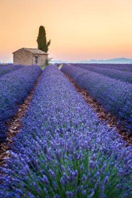 Nálepka Valensole, Provence, Francie. Lavender pole plné fialové květy