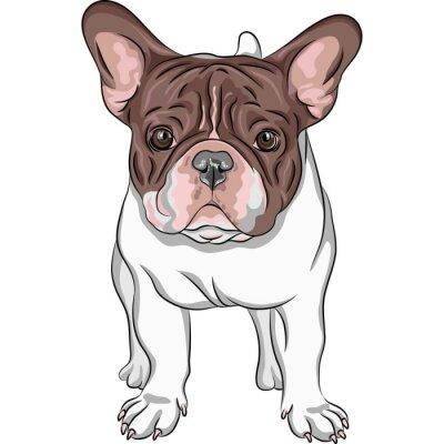 Nálepka vektor skica domácí pes Francouzský buldoček plemeno