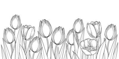 Nálepka Vektorové horizontální hranice s obrysem tulipánů květiny, pupen a ozdobné listy v černé izolovaných na bílém pozadí. Konturové tulipány pro pozdrav jarní design nebo omalovánky.