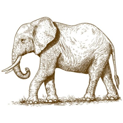 Nálepka vektorové ilustrace gravírování slona