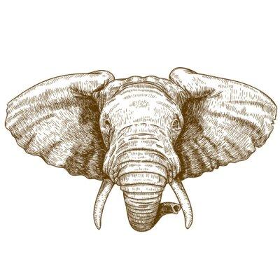 Nálepka vektorové ilustrace gravírování sloní hlavy