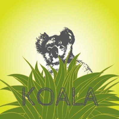 Nálepka Vektorové ilustrace koala v eukalyptu listy. Koala. Eucalyptus strom.