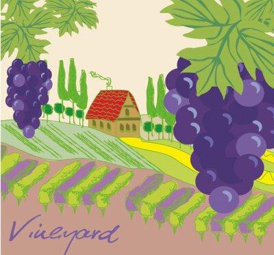 Nálepka Vektorové ilustrace vinic