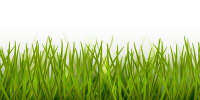 Nálepka Vektorové realistické bezešvé zelené trávě hranice nebo rám izolovaných na bílém pozadí - příroda, ekologie, životní prostředí, zahradnické šablony