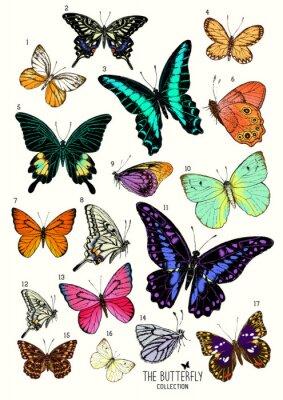 Nálepka Velká sbírka motýlů, ručně kreslenými set isolated.Vector ilustrace
