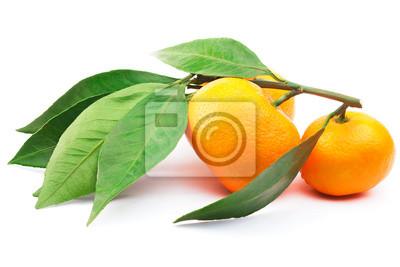Nálepka Větev s mandarinky a listy na bílém pozadí s ořezové cesty