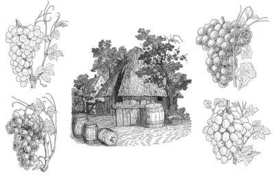 Nálepka Vineyard ilustrace