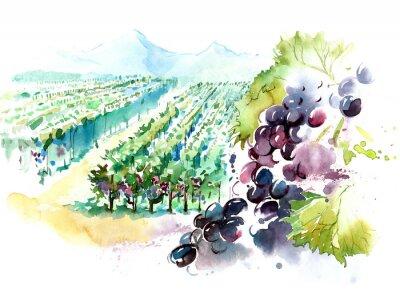Nálepka vinice