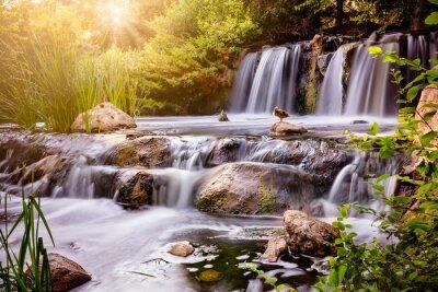 Nálepka Vodopád při západu slunce s kachnu