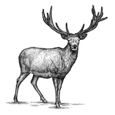 Nálepka vyrýt jelen ilustrační