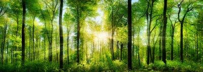 Nálepka Wald Panorama mit Sonnenstrahlen