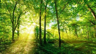 Nálepka Waldpanorama v zlaté slunce