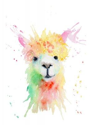 Nálepka watercolor drawing of an animal - alpaca, drops, splashes