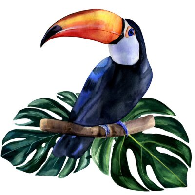 Nálepka Watercolor hand painted colorful realistic illustration of toucan bird with monstera leaves. Bright tropical composition is perfect for invitation for thematic wedding or party.