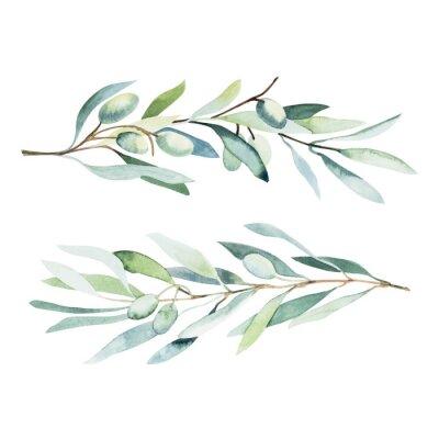 Nálepka Watercolor olive branch. Sketch of olive branch on white background