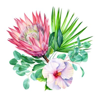 Nálepka Watercolor protea flower, isolated on white background. Botanical illustration. Hand painted watercolor.