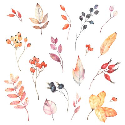 Nálepka Watercolor set of branches with berries dog rose, rowan and colorful leaves. Autumn illustration isolated on white background, decoration collection for your design.