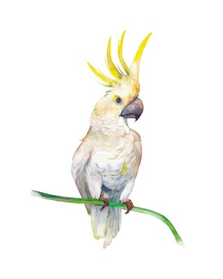Nálepka Watercolor tropic bird: yellow crested cockatoo. Single parrot on white background. Natural illustration