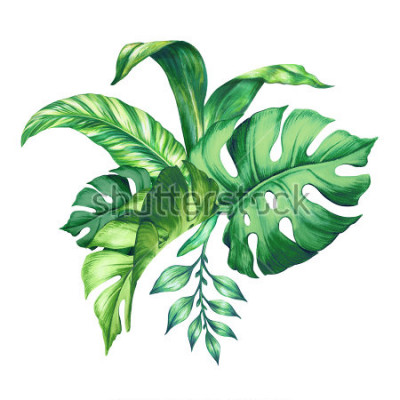 Nálepka watercolor tropical green leaves, isolated on white background